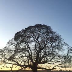 Amanhecer na Tulha. Mobgrafia com um IPhone6 Ensaio: Natureza