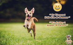 #FelizViernes #HappyFriday #viernes #friday #petlover