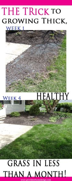 Not all grass growing methods are created equal. I learned that the hard way. Come find how to successfully grow grass the first time! Landscaping Company, Front Yard Landscaping, Growing Grass, Yard Design, Shrubs, Landscape Design, Lawn, Outdoor Decor, Plants