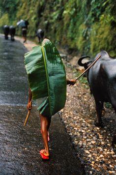 Banana leaf rain cover, Kathmandu, Nepal, Steve McCurry