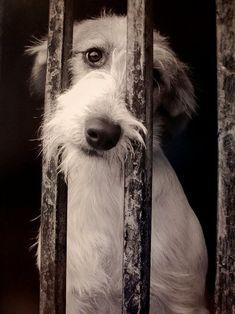 eden-eff:  Io credo che anche gli animali abbiano un'anima. Maltrattarli con qualsiasi mezzo, è una delle cose più orribili che l'uomo riesca a fare.