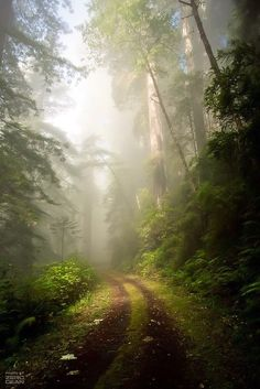 ***Path in a misty forest (likely California) by Zero Dean [Name based on the watermark, there are several links about him. This photo is not on his Flickr account and reverse image search shows no other source]