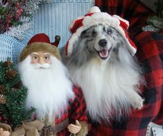 noah-santa.jpg?utm_source=Sheltie+Nation+Subscribers&utm_campaign=8ad94382ef-RSS_EMAIL_CAMPAIGN&utm_medium=email&utm_term=0_f235c5a63f-8ad94382ef-87202577