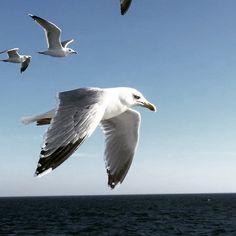 #bird #möwe #hashtag #sea #gull #meer #ostsee #fishing #nice #thismoment #moments #enjoy #picoftheday