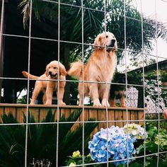 Daddy ... I think that fence is there for a reason ..Don't be silly Lil Sperry...1..2..3..JUMP!