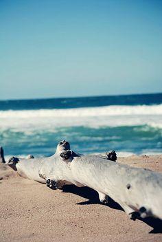 Visit more KZN beaches! Durban South Africa, South Afrika, Beach Bum, Beach Trip, Garden Pavillion, City By The Sea, Kwazulu Natal, Peaceful Places, Sandy Beaches