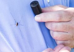 Ford's spider screen: Ford invention fights pesky and harmful invader: spiders
