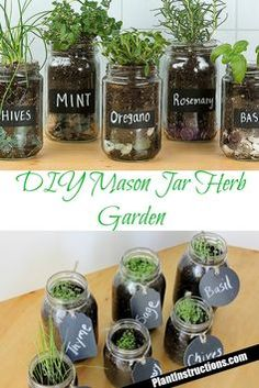 Tremendous Herb Gardening The Many Good Things About It Ideas - Gardening Herb Mason Jar Herb Garden - Wanna have a windowsill full of herbs all year round? Look no further than this DIY mason jar herb garden that . Mason Jar Herbs, Mason Jar Herb Garden, Diy Herb Garden, Garden Plants, Herb Garden Design, Herb Plants, Mason Jar Succulents, Plants In Jars, Garden Paving