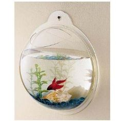 Wall mount fish bowl.     My doctor's office in Santa Monica California at St. John's Medical Center has a full size wall aquarium. Gives a great view in a 3D perspective. The fish seem happier too. More attention is paid to them and they have more to see as well. Love this.