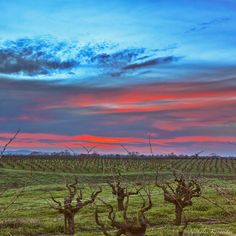 Old Vine Zinfandel with a clash of color...good morning from Wine Country!  #picturetokeep_nature #NatGeoLandscape #AGameofTones #best_skyshots #bellashots #bayareabuzz #country_features #caliexplored #california4fun #destinationearth #exclusive_shots #explorehisearth #fotocatchers #fotofanatics_sky_ #goldenvisuals #heart_imprint #igmasters #igs_newtag #igworldclub #ig_countryside #livefolk #liveauthentic #loves_skyandsunset #master_shots #nature_sultans #princely_shotz #rawcalifornia…