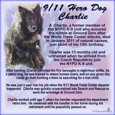 Charlie 9/11 Hero Dog