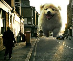 elmer duyvis. giant puppy.