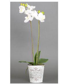 Allissias Attic Design & Vintage French Style — Phalaenopsis Purple or White Orchid in White Tin Pot