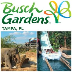 2 Admission Passes to BUSCH GARDENS to experience Florida's epic roller coaster rides and to visit their state-of-the-art animal habitats!