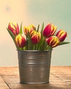 Red and Yellow Tulips in a Can. Fine Art Still Life Photography Print for Home Decor Wall Art. Silver metal container of fresh cut red and yellow tulips. Still life of fresh tulip flowers. ~~ SELECT DESIRED SIZE USING THE OPTIONS BUTTON ABOVE ADD TO CART. Available in: 5x7, 8x10, 11x14, 12x18, 16x24, 20x30, 24x36 prints.