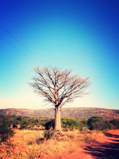 #Photograpy #bushveld #africa #colourful#