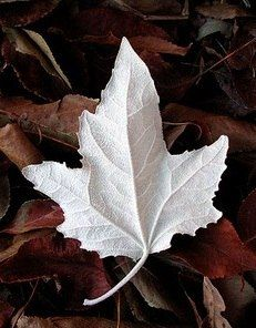 Wow is this winter leaf beautiful.