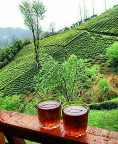 A community to share your tea experiences. Image Mix, Persian Architecture, Types Of Tea, Web Images, Iran, Vineyard, Backyard, Pictures, Photography