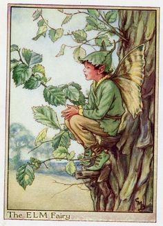 Elm Tree Flower Fairy Vintage Print, c.1950 Cicely Mary Barker-boekillustratie plaat