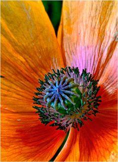 Reader Gallery: 30 Beautiful Close-Up Flower Photos | Popular Photography