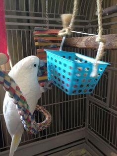 Genius DIY Bird Toy Ideas – Parrot Stands
