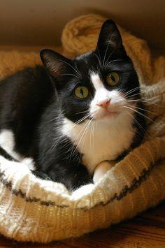 Black White Cat 5x7 Fine Art Photographic Print Great Gift Idea Under 10. $7.00, via Etsy.