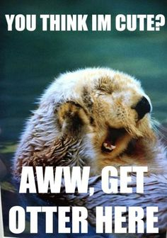 you otter check this out. otter humor is the best Animal Captions, Funny Animals With Captions, Animal Puns, Funny Animal Quotes, Funny Animal Pictures, Cute Funny Animals, Funny Cute, Cute Pictures, Hilarious