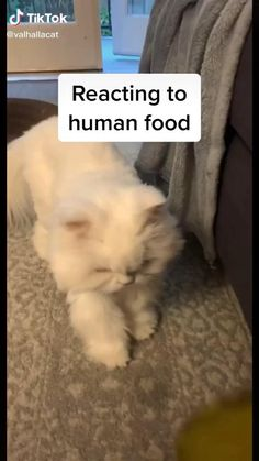 Funny Cute Cats, Funny Animal Jokes, Cute Baby Cats, Cute Cats And Kittens, Funny Animal Videos, Cute Funny Animals, Animal Memes, Kittens Cutest, Funny Dogs