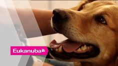 Cancer detecting Dogs - Part 2 | Extraordinary Dogs