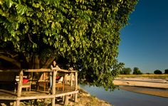 Famous for its walking safaris, this thatched safari camp has a remote setting in Zambia's South Luangwa & is ideal for honeymoons. Bush, Africa, Lodges, Safari, Remote, To Go, Relax, Journey, Camping