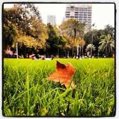 Hyde Park, Sydney (via instagram)