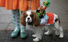 """Via The Telegraph, photo by Julien Behal: """"Margaret Farrell shows off Shanty, winner of the best dressed competition, at the Irish Kennel Club Pet Dog Expo 2013 in Dublin"""""""