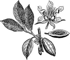 cocoa flower - Google Search