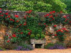 I love the contrast between the bright colors, groomed topiaries, and aged stonework. ~s
