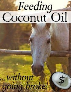 Feeding Coconut Oil to Horses...Without Going Broke! | Savvy Horsewoman