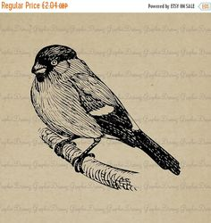 ON SALE 55% OFF Bullfinch  Km2212  Digital image by GraphicDreamz