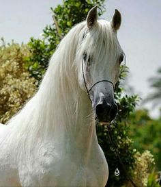 Beautiful white horse.