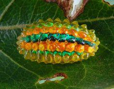 Mirando al mundo con sentimientos: De orugas a mariposas