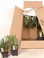 Risultati immagini per packaging for plants