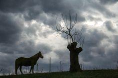 Beeindruckendes Foto von dunklen Wolken, der Silhouette von einem Pferd und einem Baum. #Wildlife #Fotografie #tiere. In der Wildlife-Fotografie sollte immer die passende Ausrüstung für richtig schöne Fotos dabei sein.  http://www.fotos-fuers-leben.ch/fotokurs/naturfotografie/wildlife-fotografie/ Hier findet ihr einige Hinweise zur Wildlife-Fotografie.