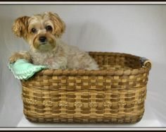 Double Wall Large Afghan, Quilt, or Gathering Basket; Hand Woven Pet Bed; Photo Prop Basket