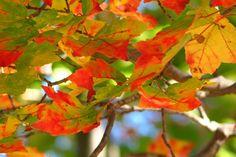 fall foliag Boston Ma 2013   Fall Foliage - Fall Cruises