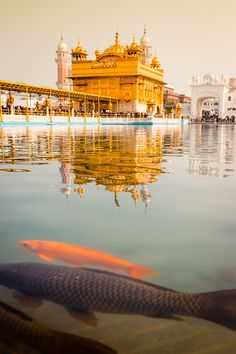 Need a gift for a fitness freak? Baba Deep Singh Ji, Guru Nanak Wallpaper, Taj Mahal, Harmandir Sahib, Guru Pics, Golden Temple Amritsar, Guru Gobind Singh, Watercolor Architecture, Amazing India