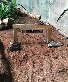 Using a stiff brush that is secured to the height of the top of the tortoises shell, this enrichment item allows a tortoise to fit underneath it and scratch its shell. Tortoise House, Tortoise Food, Tortoise Habitat, Tortoise Table, Reptile Habitat, Sulcata Tortoise, Tortoise Shell, Tortoise Terrarium, Turtle Terrarium