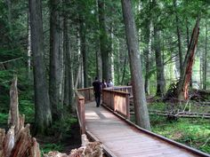 At Glacier National Park, hike the Trail of the Cedars. This 1.5 mile hike has boardwalks and bridges, so it's perfect for the beginning hiker, families with young children, and anyone with a physical disability.