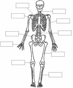 Dibujos para imprimir del sistema oseo - Imagui
