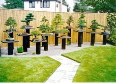 Wide angle view of the trees THE BEST HOME GARDENING GUIDE IS WAITING FOR YOU.