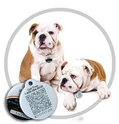 Win a QtagO QR Code Pet Tag!