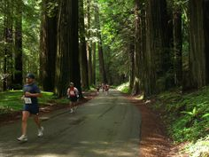 another beautiful route: Avenue of the Giants Marathon