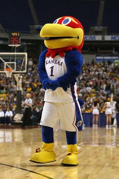Mascot of the Kansas Jayhawks.     For Great Sports Stories and Audio Podcasts, Visit our Blog at www.RollTideWarEagle.com